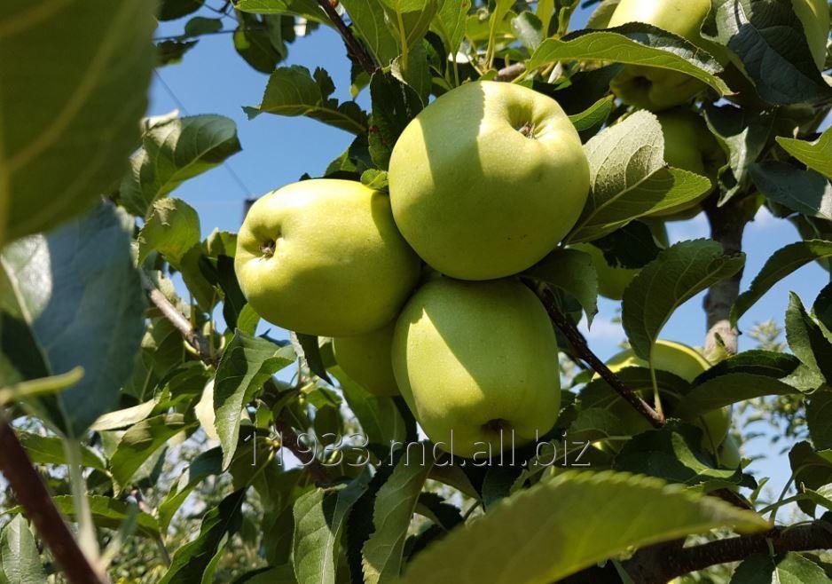 Купить Яблоки Golden Delicious