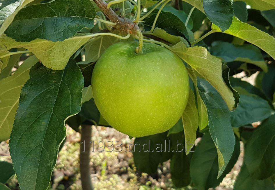 Купить Яблоки Granny Smith