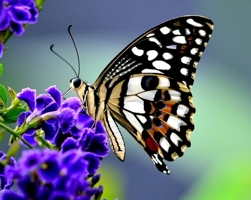 Отпуск, картинки с бабочками живыми