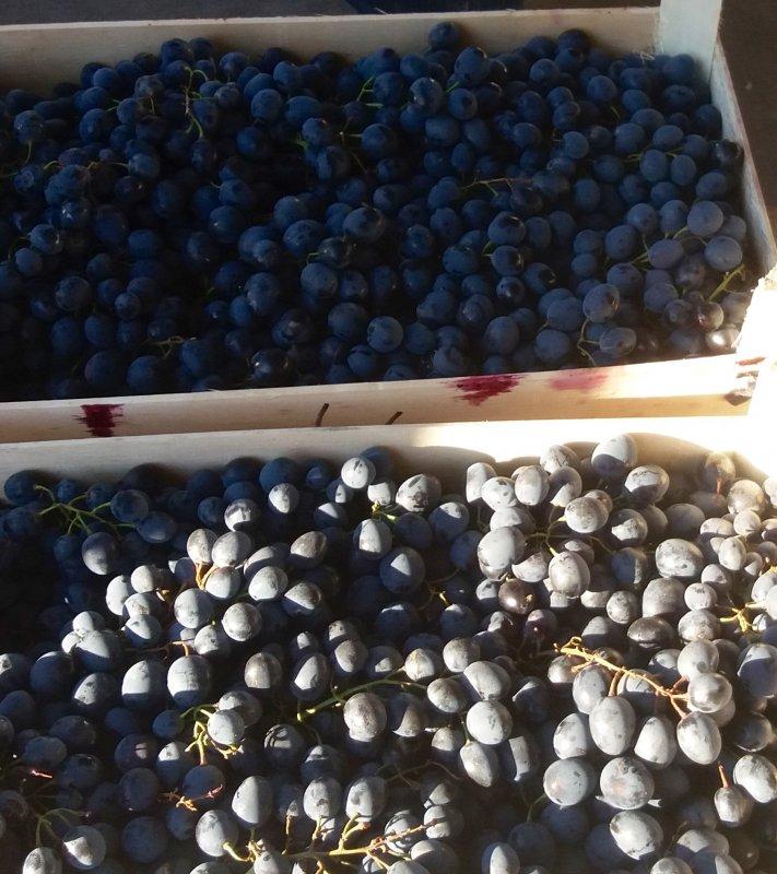 Купить Виноград Молдова