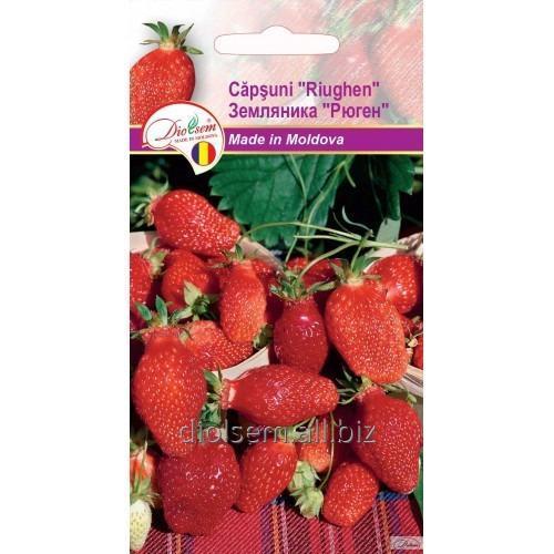Buy Seed Zemlânika Rügen 0.1 g