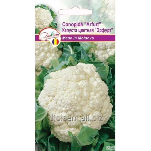Семена Капусты цветной Эрфурт 0,5гр.