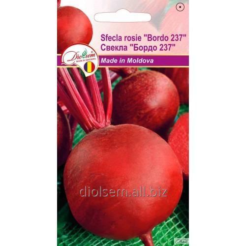 Семена свеклы Бордо 237