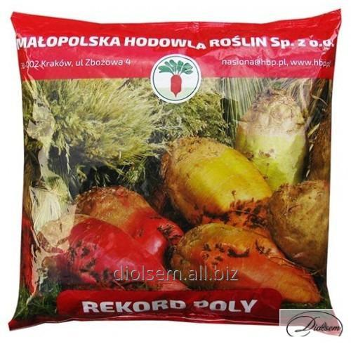 Buy Beet seeds Stern RECORD POLY
