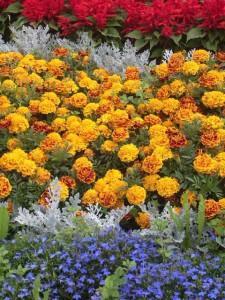 Купить Посадочный материал овощных и цветочных культур