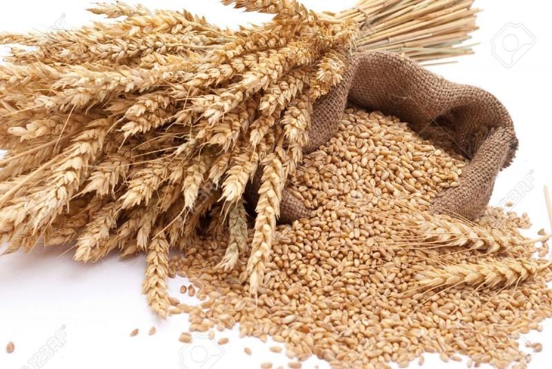 Купить Пшеница на экспорт