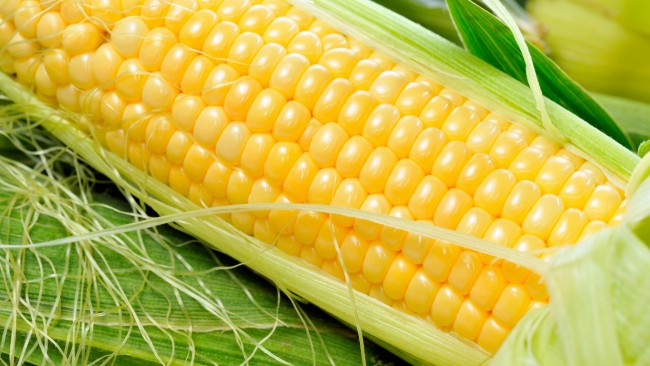 Купить Кукуруза на экспорт