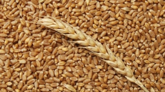 Buy Wheat for export from Moldova