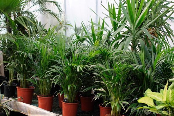 Органические препараты для растений в Молдове