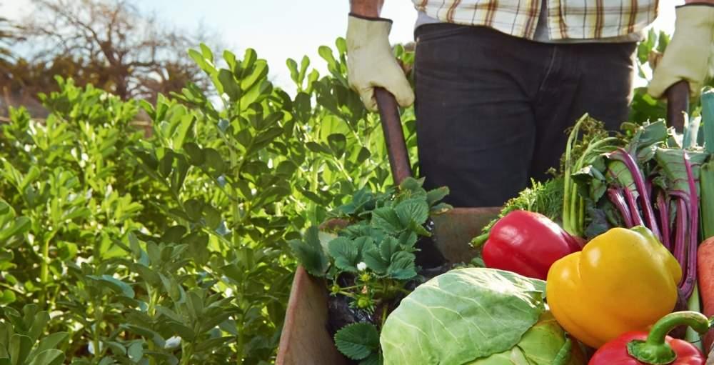 Средства защиты растений в Молдове