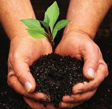 Стимуляторы роста для растений в Молдове