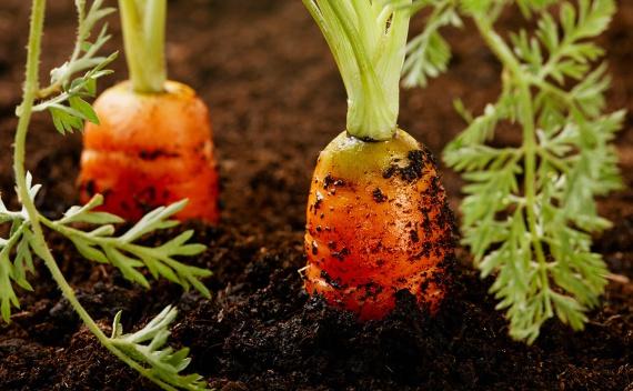 Органические удобрения в Молдове