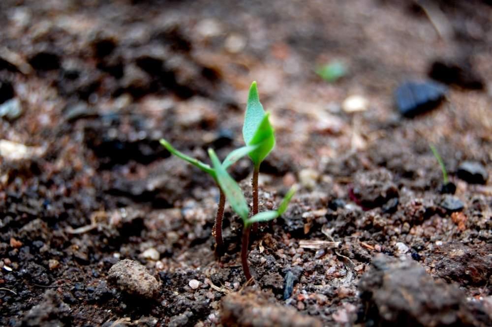 Удобрения органические в Молдове