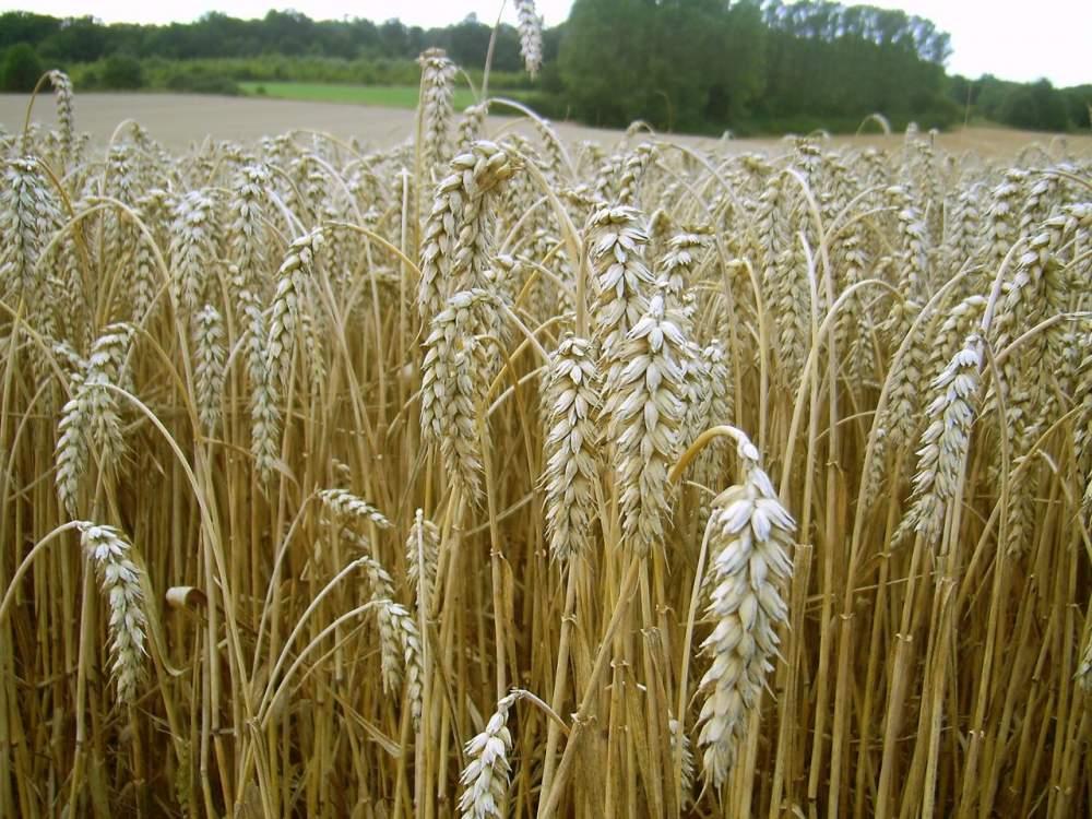 Биологические средства для защиты растений