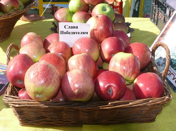Купить Яблоки летние Слава Победителям