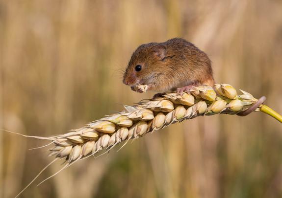 Препараты для борьбы с мышами, экспорт