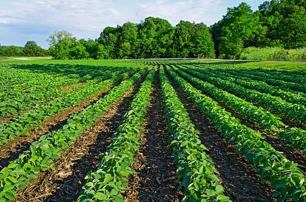 Препараты для кукурузы, горoха ,сои и других культур