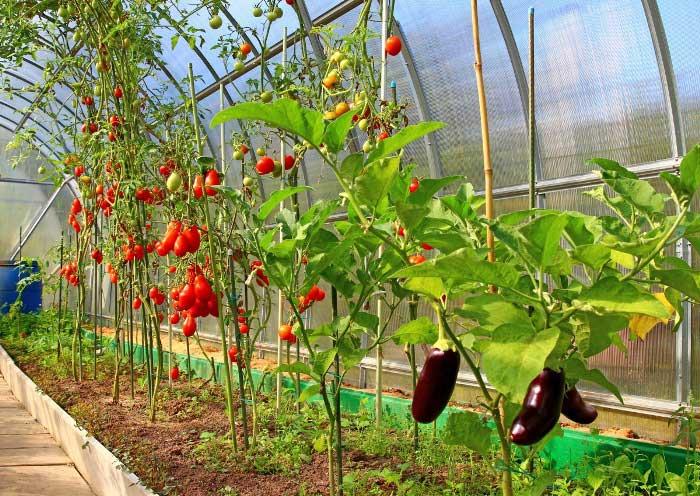Препараты для овощных и цветочно-декоративных культур, закрытый и открытый грунт
