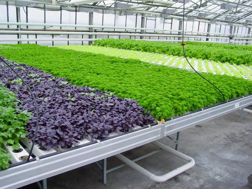 Биопрепараты овощные и цветочно-декоративные культуры