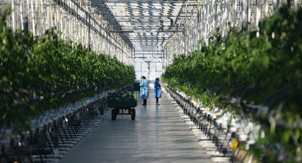 cumpără Preparate vegetale și culturi de plante ornamentale