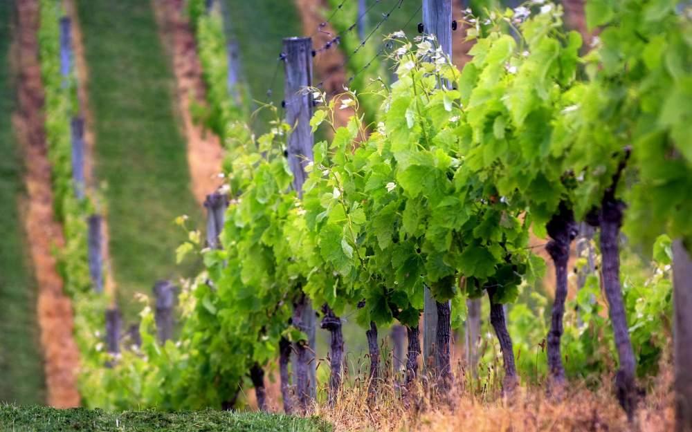 Buy Биологические средства для виноградника