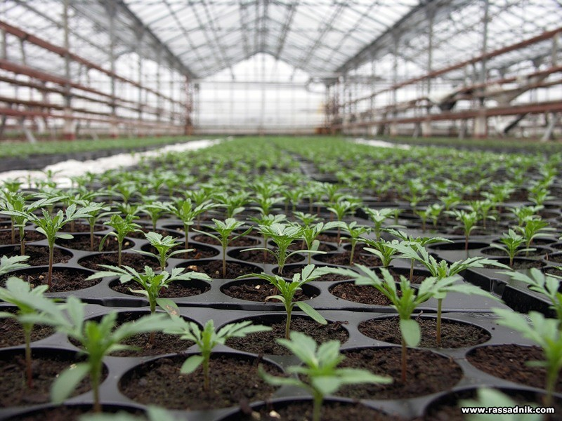 Chemical weed and pest killers