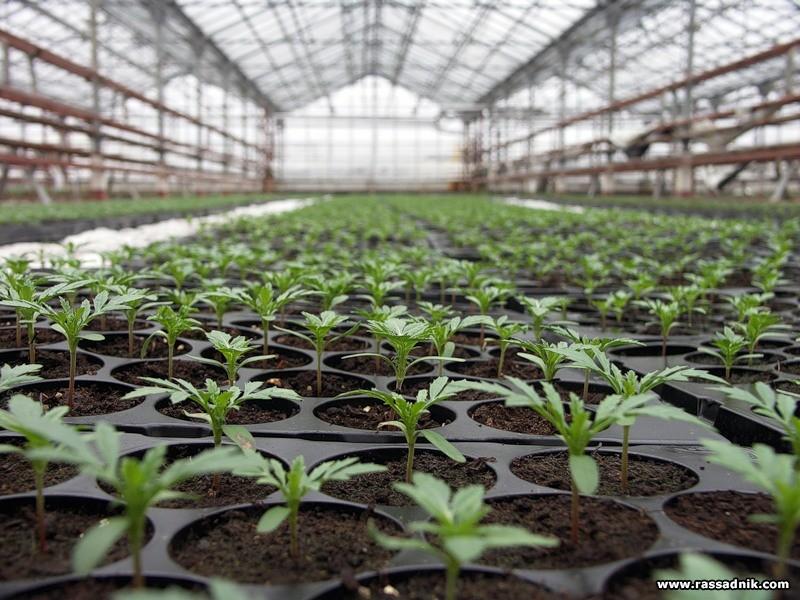 Les moyens de la protection des plantes les chimiques