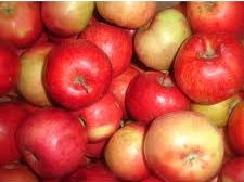 Buy Apple of winter grades