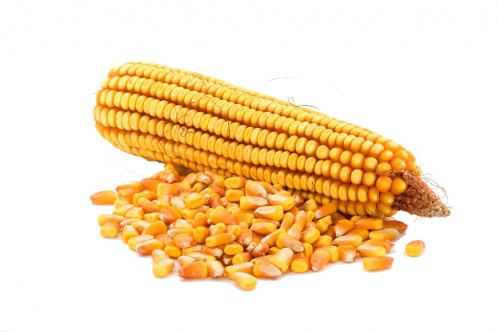 Купить Семена кукурузы для экспорта