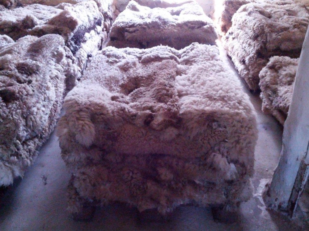 Купить Шкуры овечьи сырье
