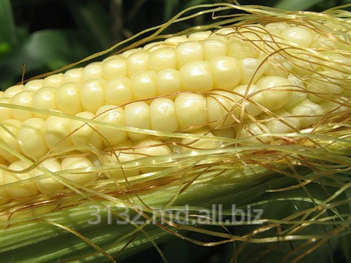 Купить Кукуруза сахарная