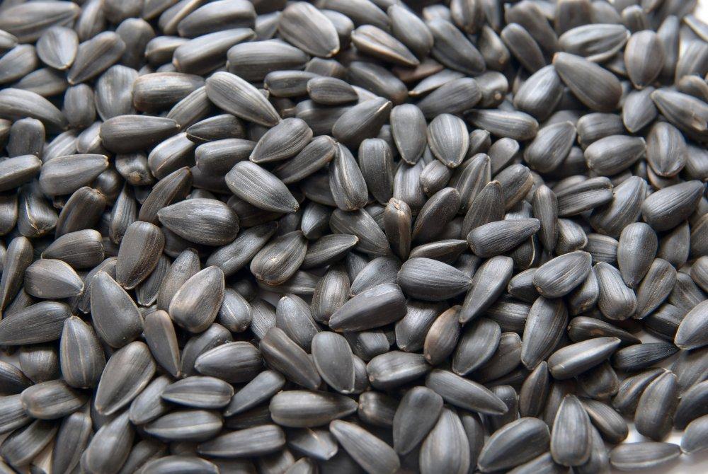 Semințe de floarea soarelui