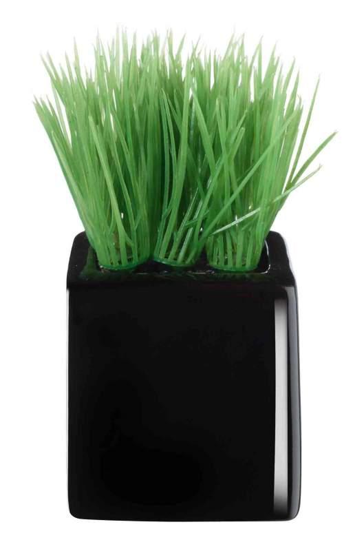Купить Мини-трава