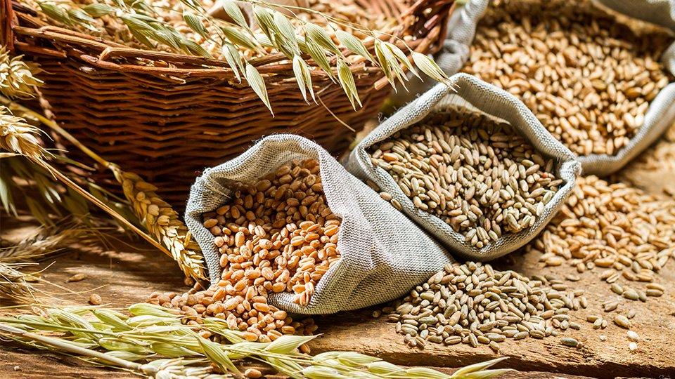 cumpără Culturi cereale