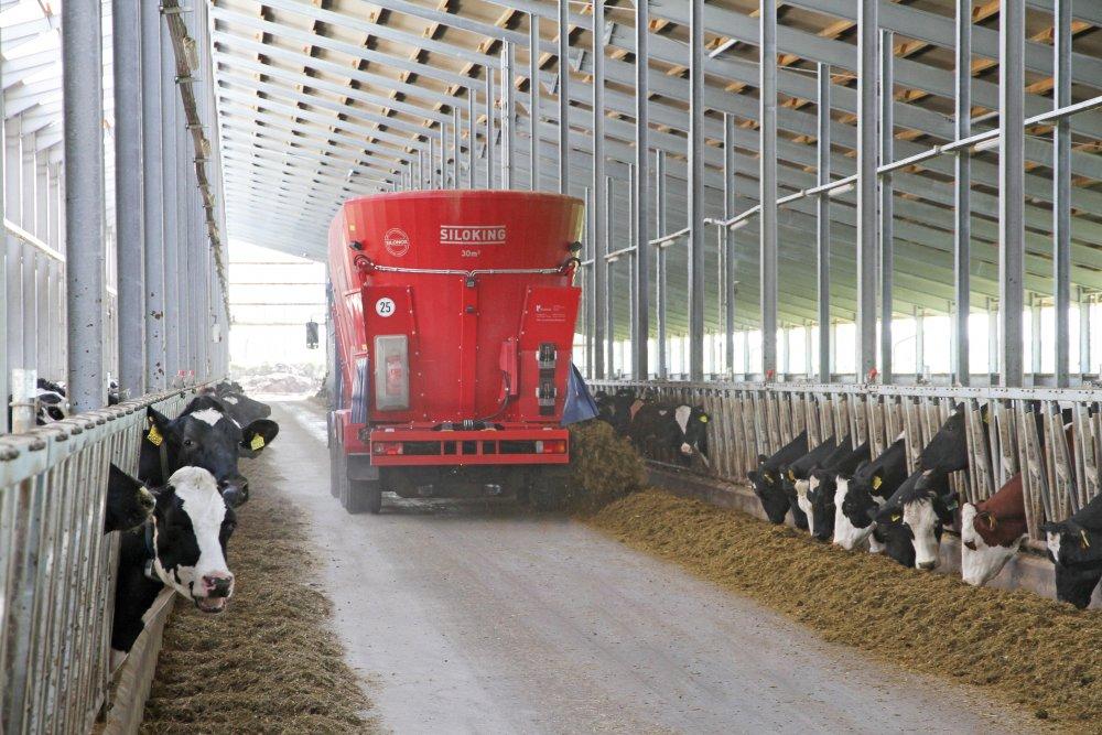 Оборудование для кормления крупного рогатого скота