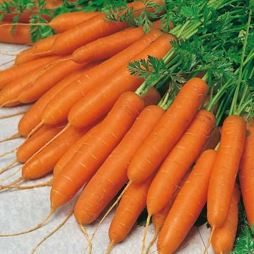 Купить Морковь, Morcovi