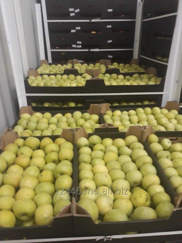 Buy Apples