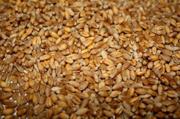 Купить Пшеница фуражная класс 4,5