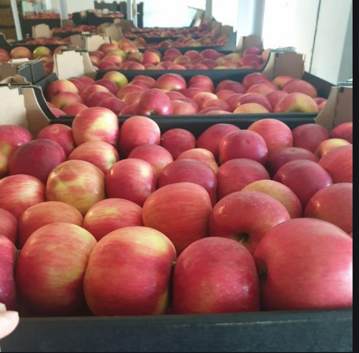 Купить Яблоки на экспорт сорт Флорина