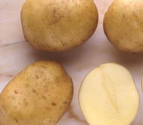 Купить Семенной картофель сорт Фрисланд