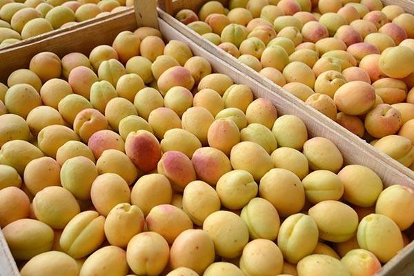 Купить Абрикосы сорт ананас на экспорт