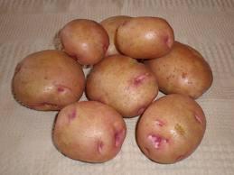 Купить Сортовой картофель