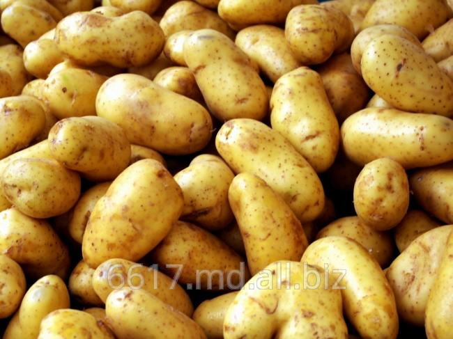 Купить Картофель ранний