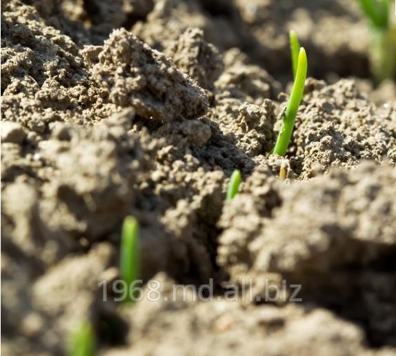Купить Протравители для предпосевной обработки семян