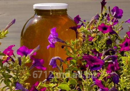 Buy Honey from flowers of an acacia