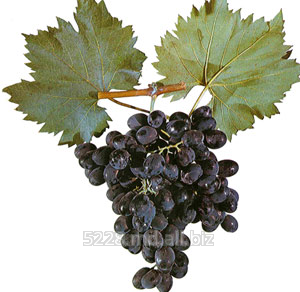 Купить Struguri de masa Moldova (Виноград Молдова)