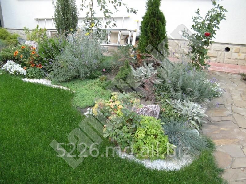 Купить Цветы, кустарники, деревья, лианы, хвойные - растения для посадки на участке
