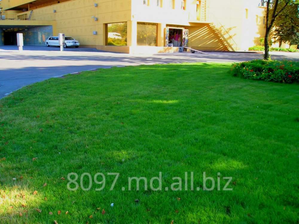 Купить Решетки газонные