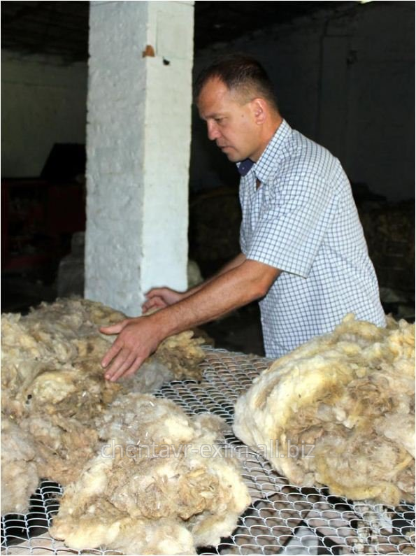 Sheep wool in Moldova for Expor