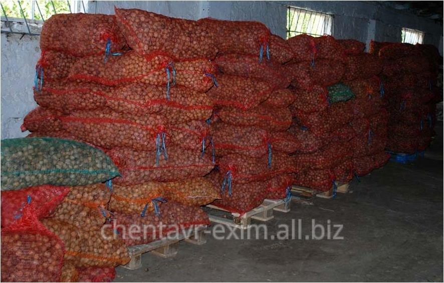Орехи в Молдове на Экспорт